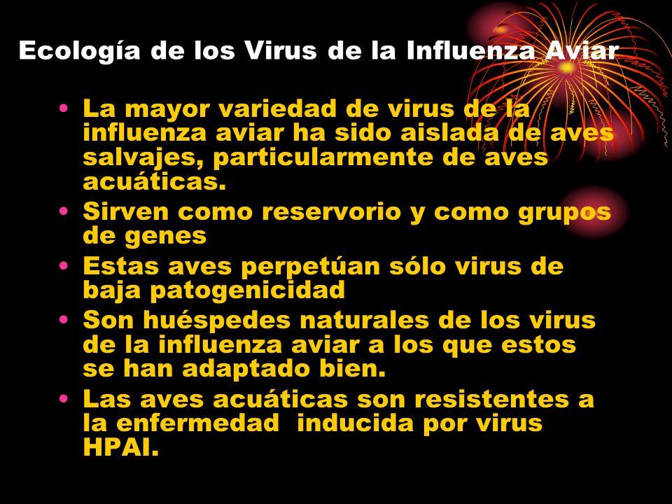 Ecología de los Virus de la Influenza Aviar
