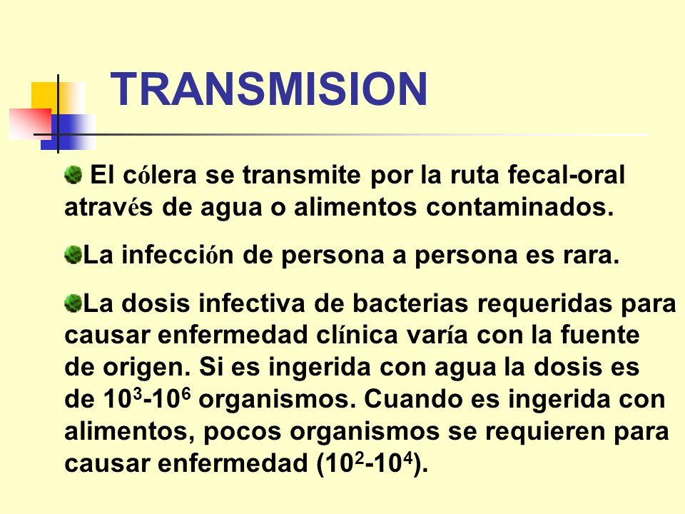 TRANSMISION El cólera se transmite por la ruta fecal-oral através de agua o alimentos contaminados.