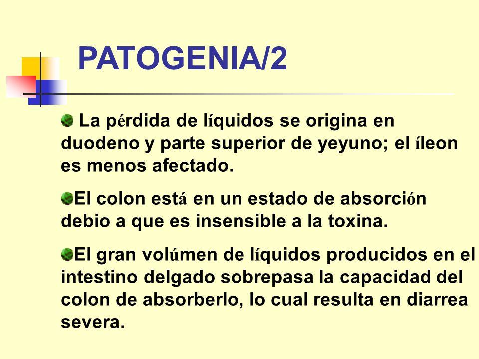 PATOGENIA/2 La pérdida de líquidos se origina en duodeno y parte superior de yeyuno; el íleon es menos afectado.