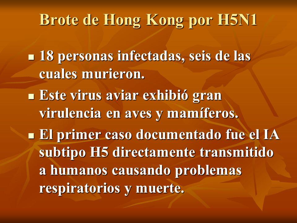 Brote de Hong Kong por H5N1