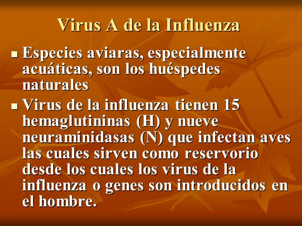 Virus A de la Influenza Especies aviaras, especialmente acuáticas, son los huéspedes naturales.