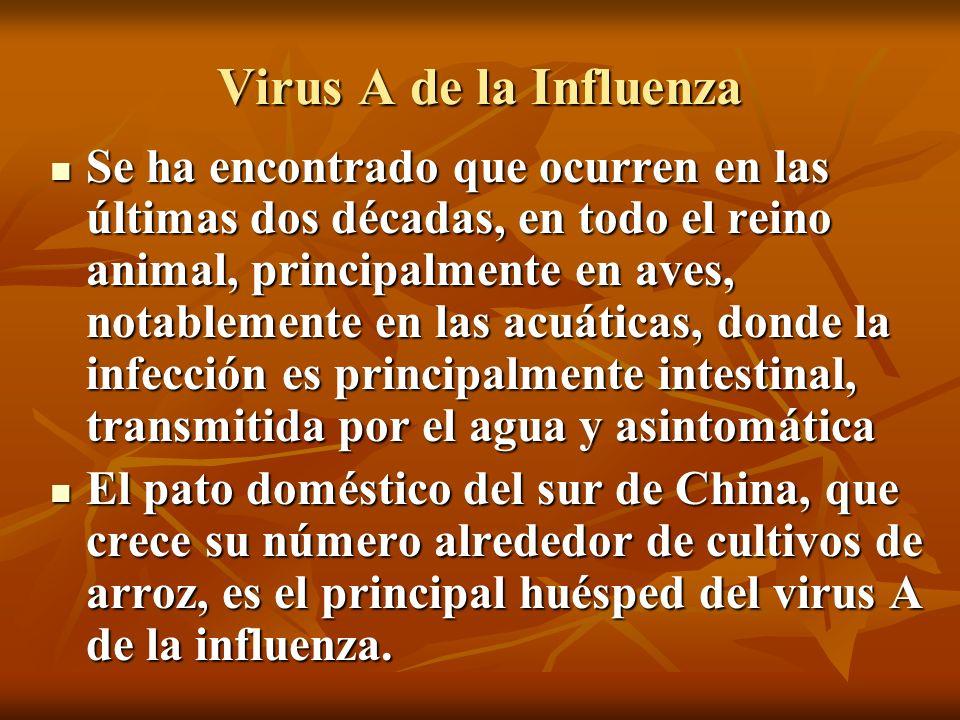 Virus A de la Influenza