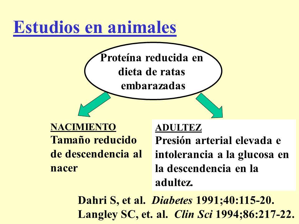 Estudios en animales Proteína reducida en dieta de ratas embarazadas