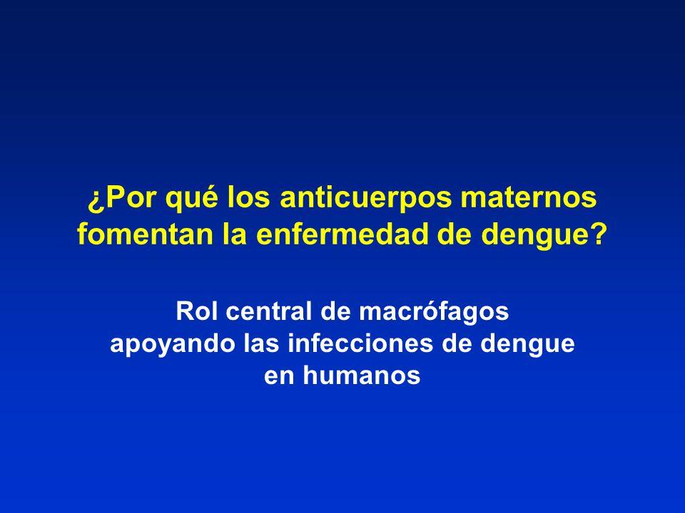 ¿Por qué los anticuerpos maternos fomentan la enfermedad de dengue