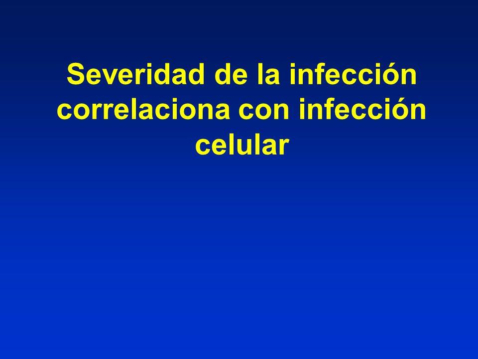 Severidad de la infección correlaciona con infección celular