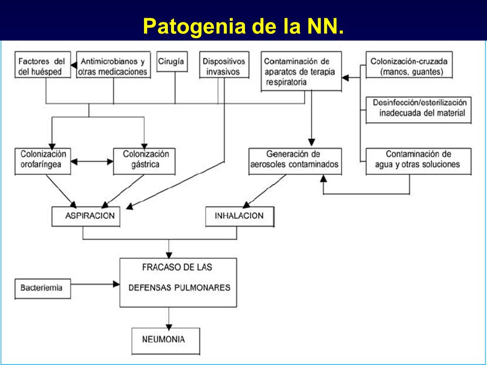 Patogenia de la NN.
