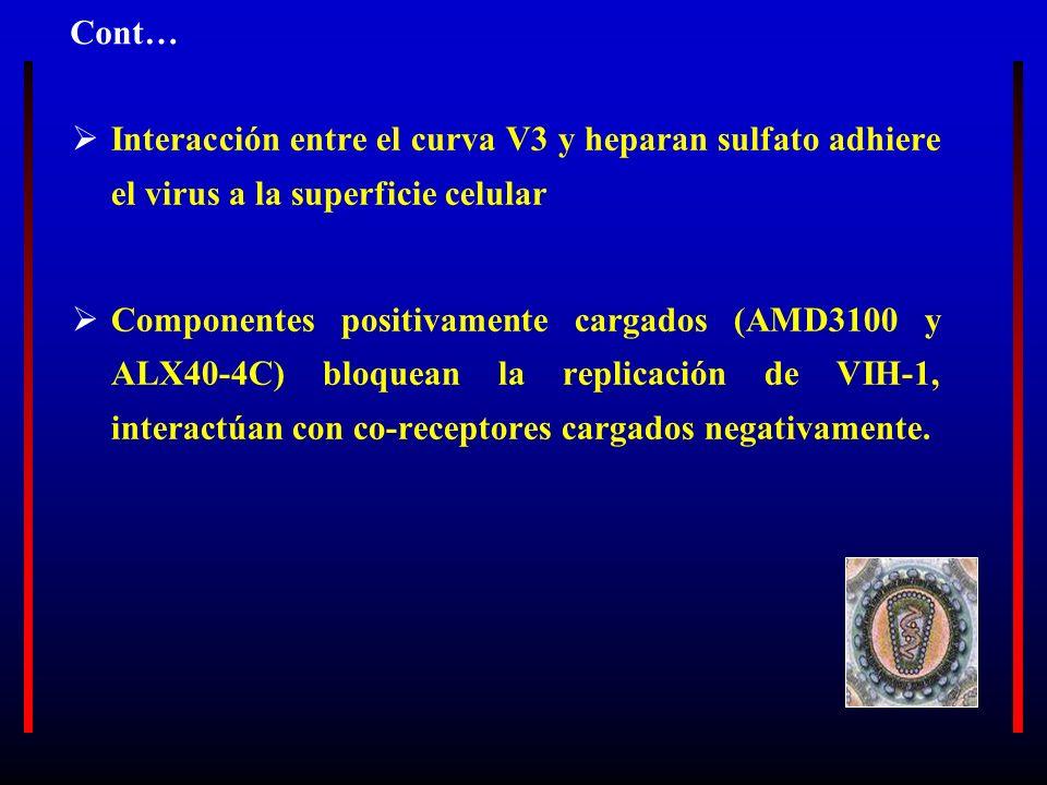 Cont… Interacción entre el curva V3 y heparan sulfato adhiere el virus a la superficie celular.