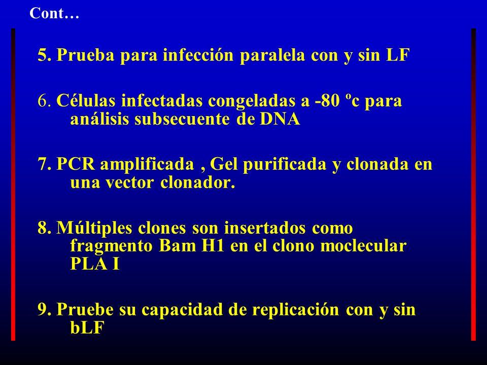 5. Prueba para infección paralela con y sin LF