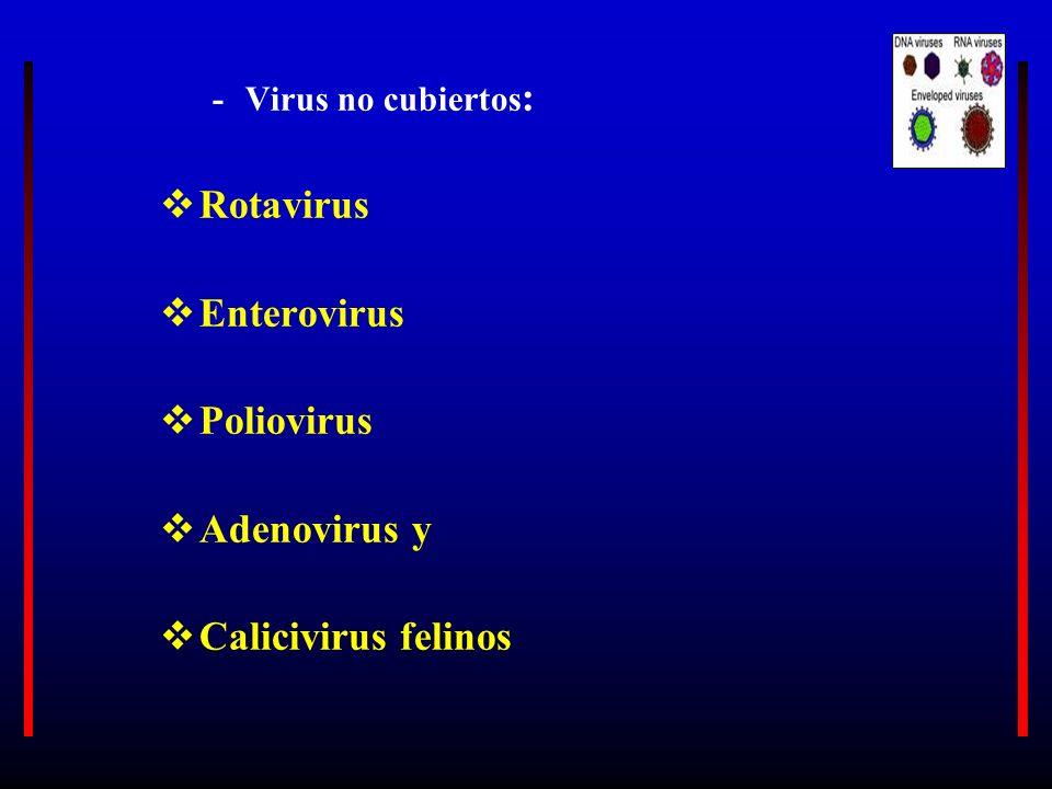 Rotavirus Enterovirus Poliovirus Adenovirus y Calicivirus felinos