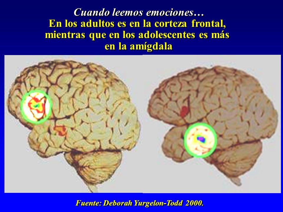 Cuando leemos emociones… En los adultos es en la corteza frontal,