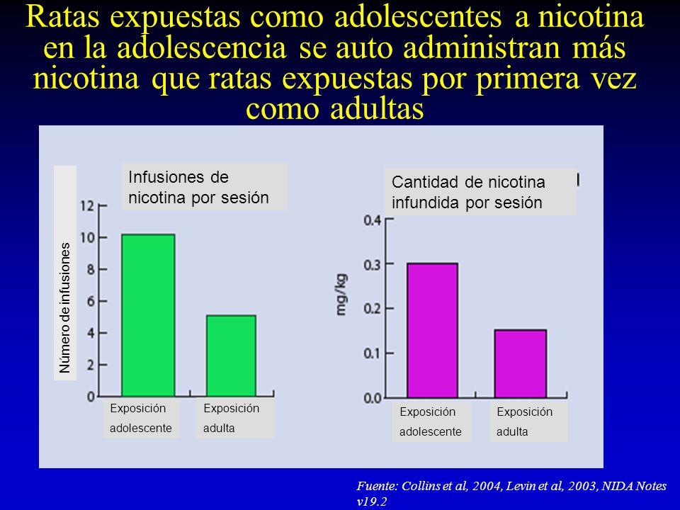Ratas expuestas como adolescentes a nicotina en la adolescencia se auto administran más nicotina que ratas expuestas por primera vez como adultas