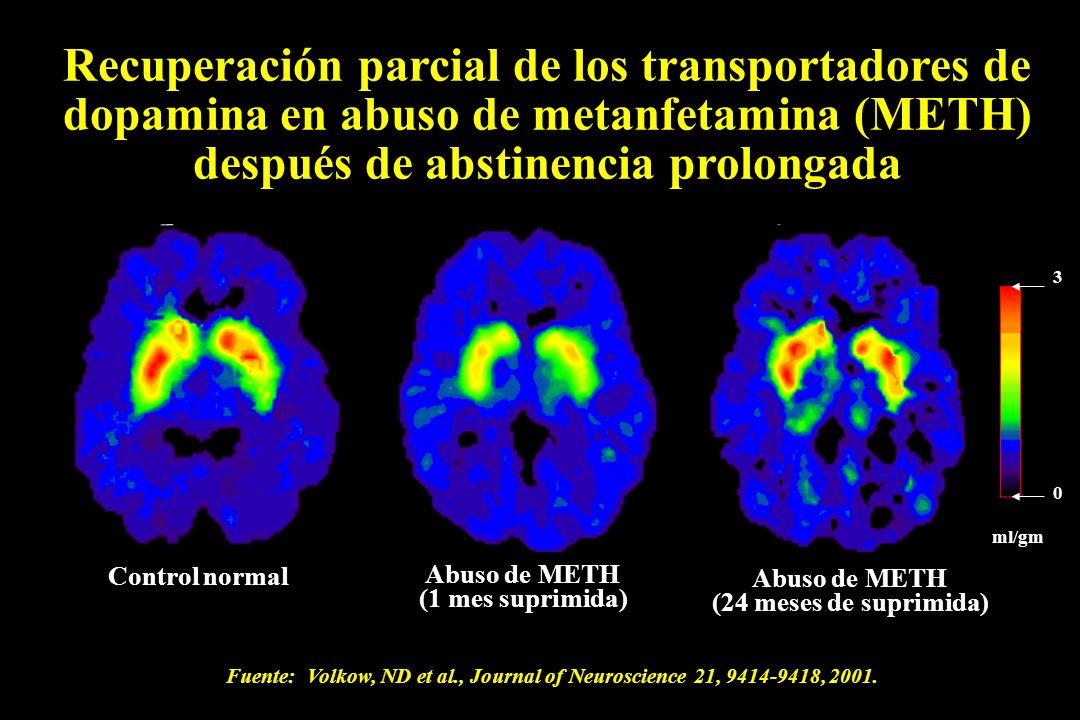 Recuperación parcial de los transportadores de dopamina en abuso de metanfetamina (METH) después de abstinencia prolongada