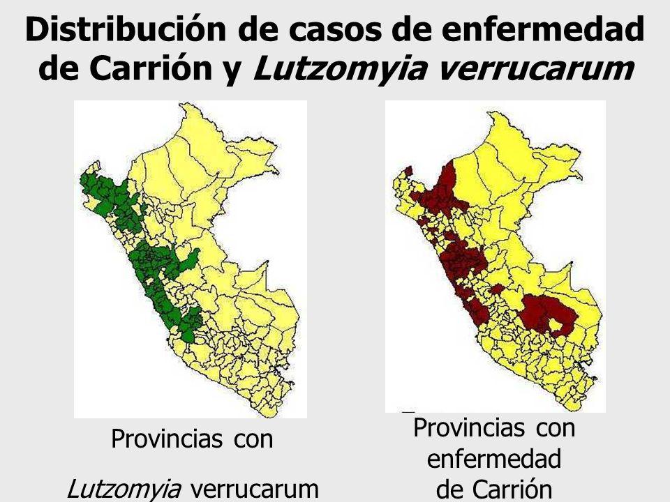 Distribución de casos de enfermedad de Carrión y Lutzomyia verrucarum