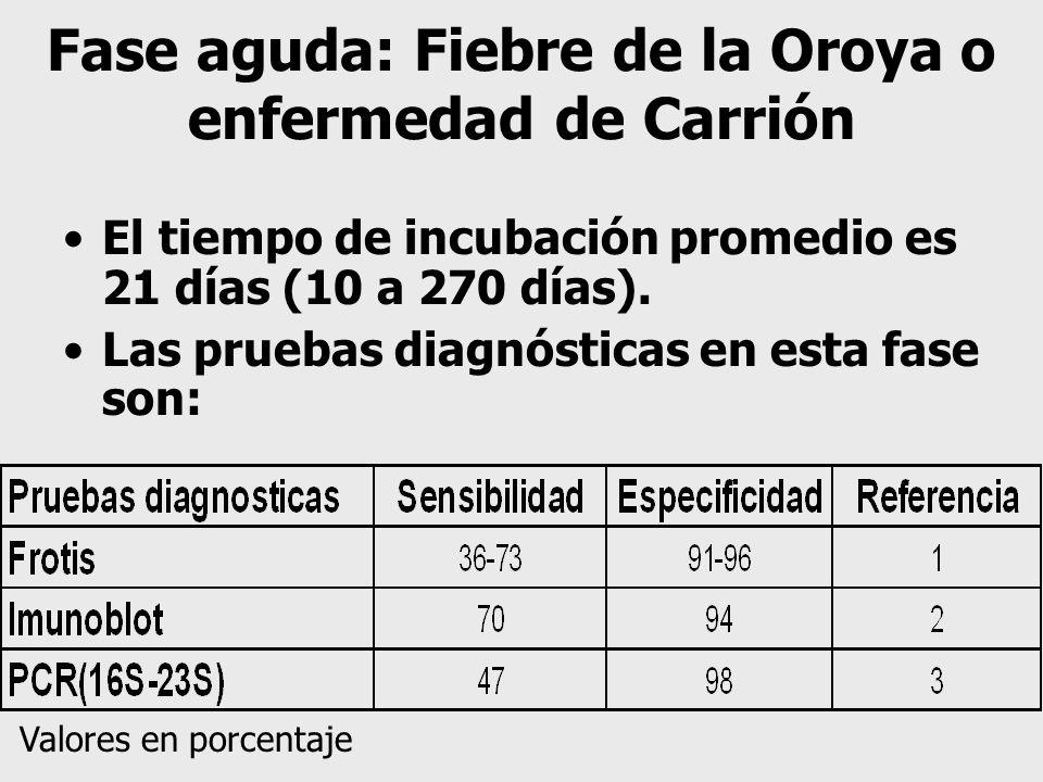 Fase aguda: Fiebre de la Oroya o enfermedad de Carrión
