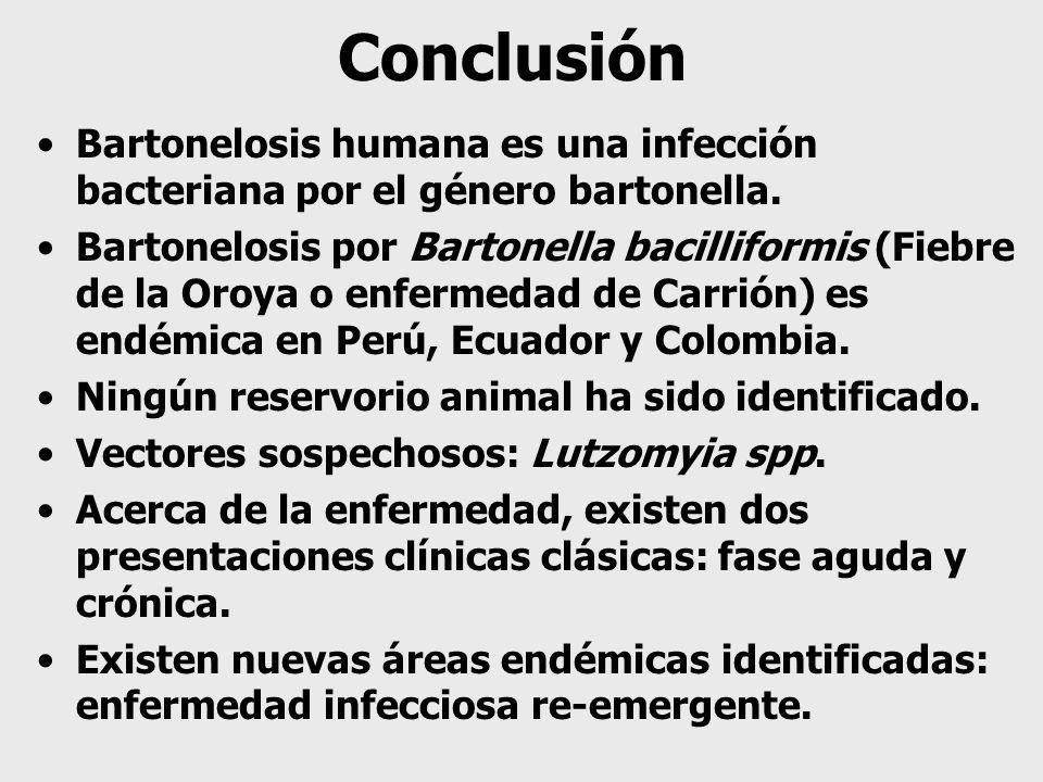 Conclusión Bartonelosis humana es una infección bacteriana por el género bartonella.