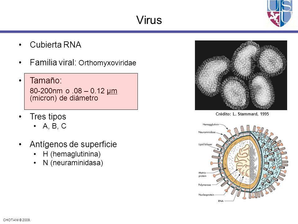 Virus Cubierta RNA Familia viral: Orthomyxoviridae Tamaño: