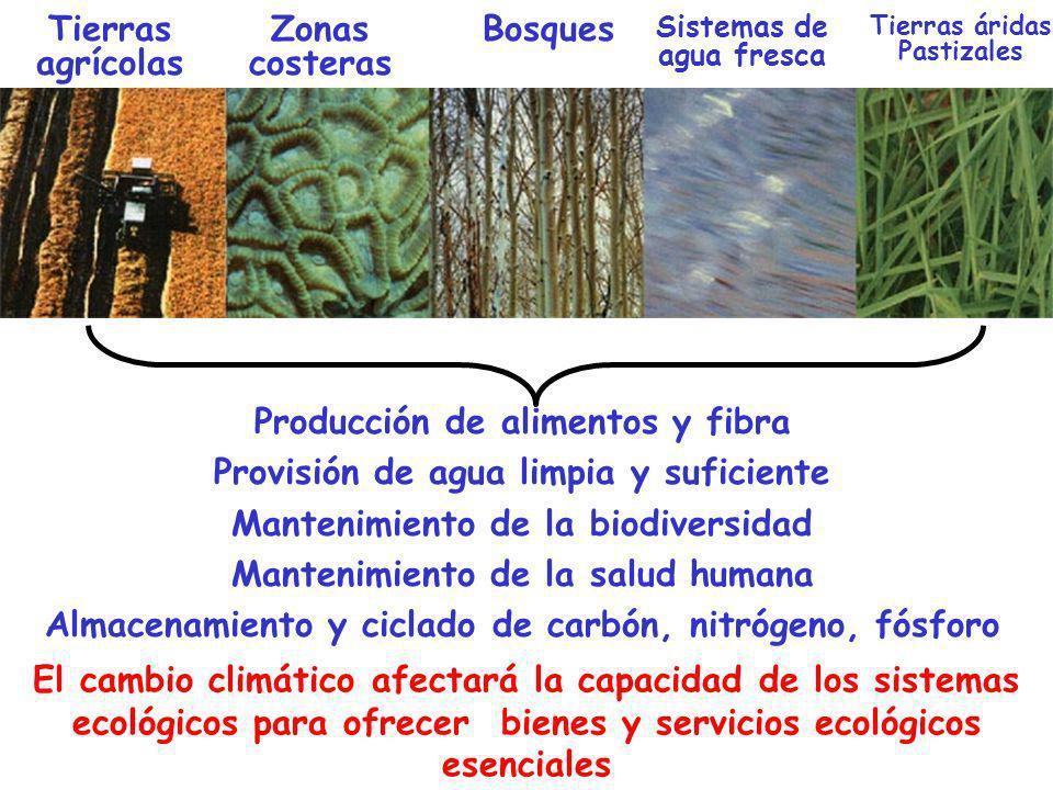 Producción de alimentos y fibra Provisión de agua limpia y suficiente