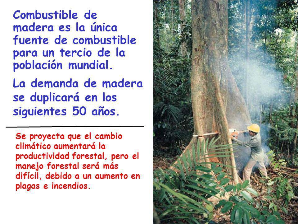La demanda de madera se duplicará en los siguientes 50 años.