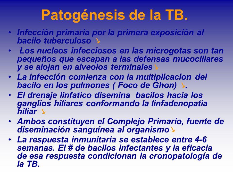 Patogénesis de la TB. Infección primaria por la primera exposición al bacilo tuberculoso ↘