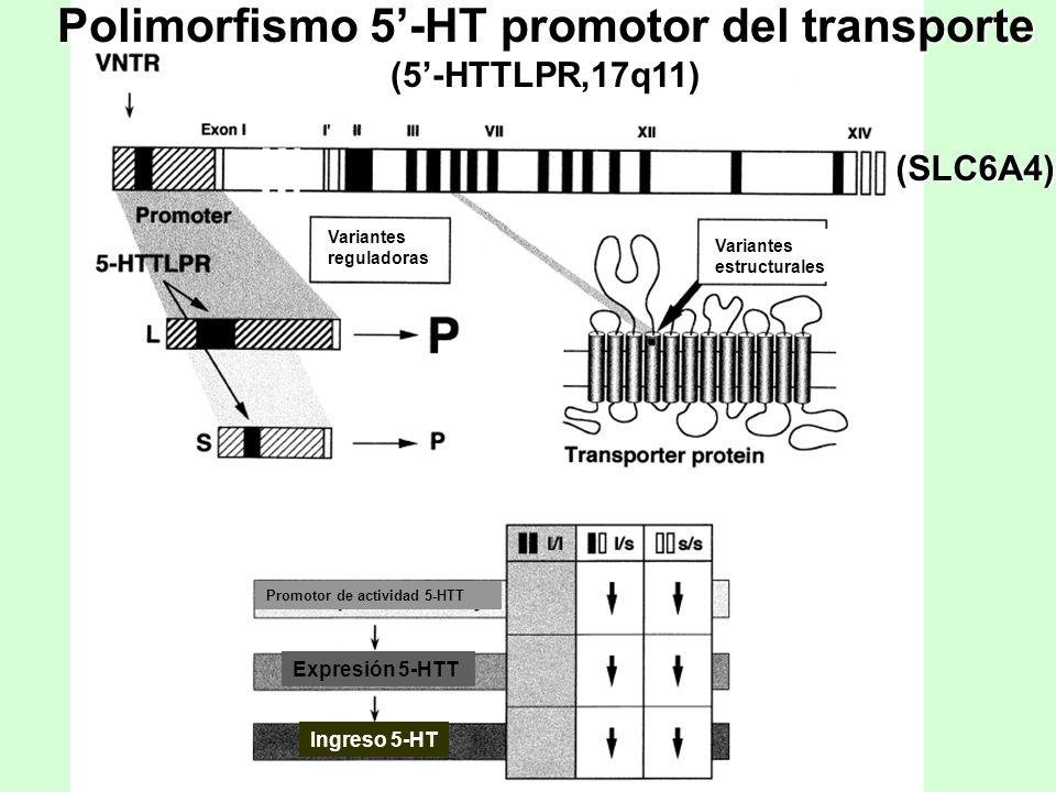 Polimorfismo 5'-HT promotor del transporte