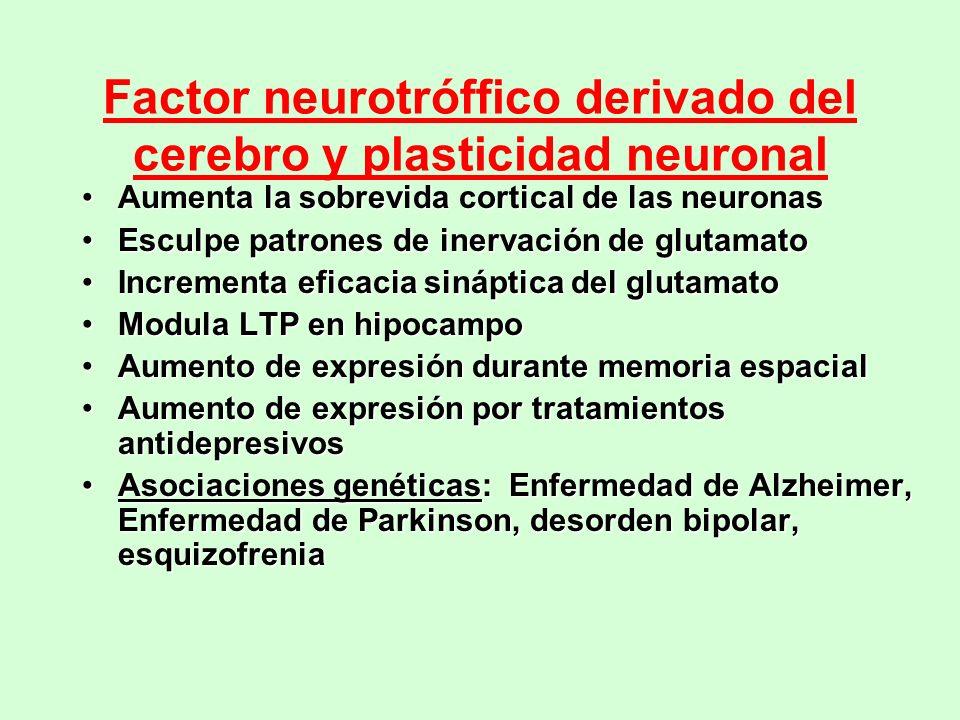 Factor neurotróffico derivado del cerebro y plasticidad neuronal
