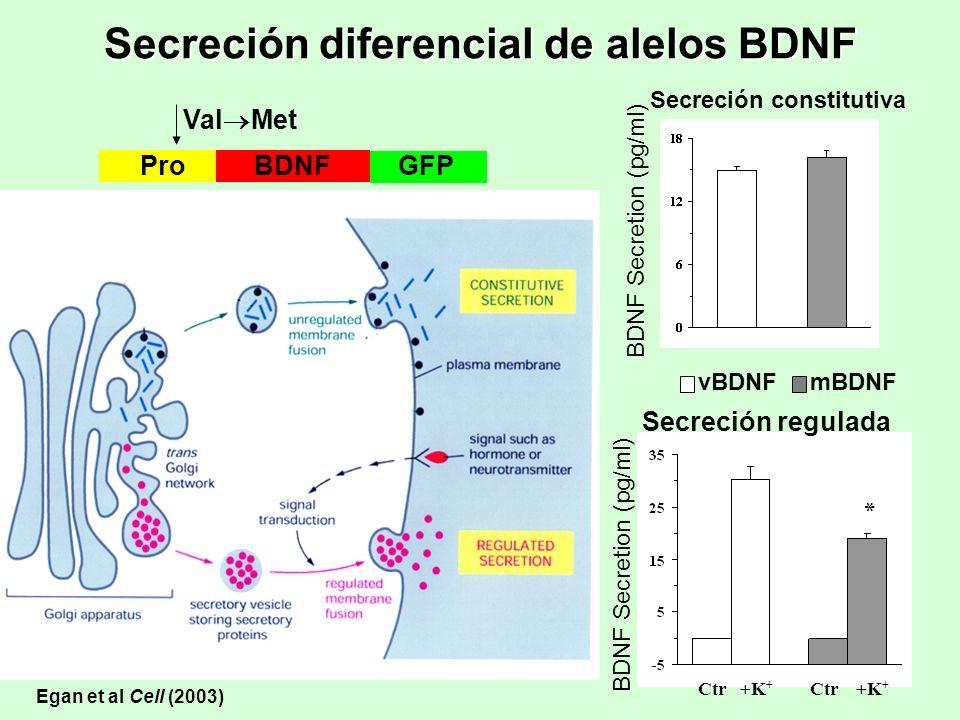 Secreción diferencial de alelos BDNF