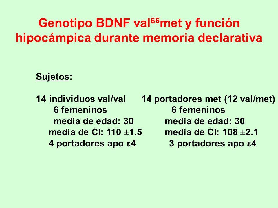 Genotipo BDNF val66met y función hipocámpica durante memoria declarativa
