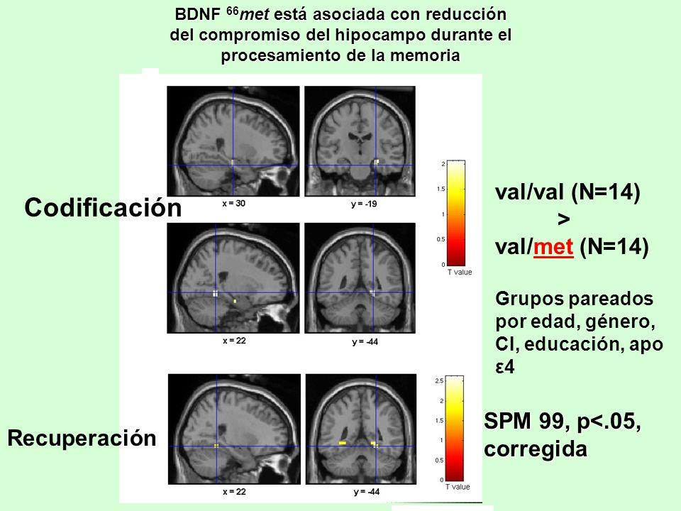 Codificación val/val (N=14) > val/met (N=14)