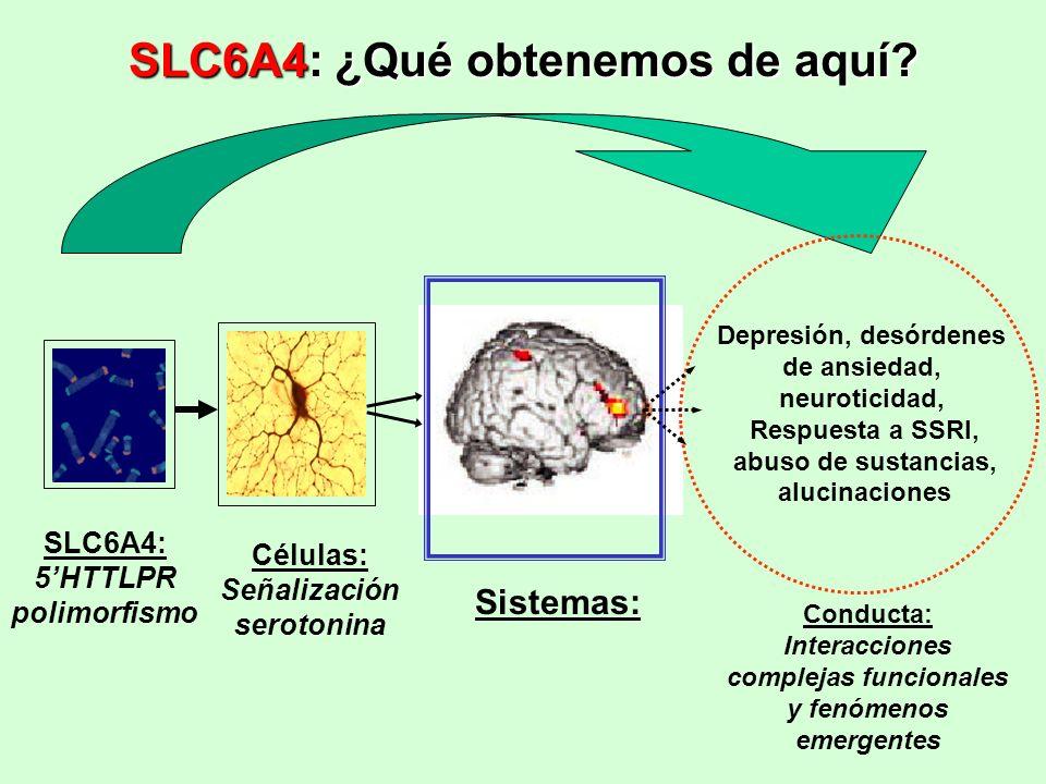 SLC6A4: ¿Qué obtenemos de aquí