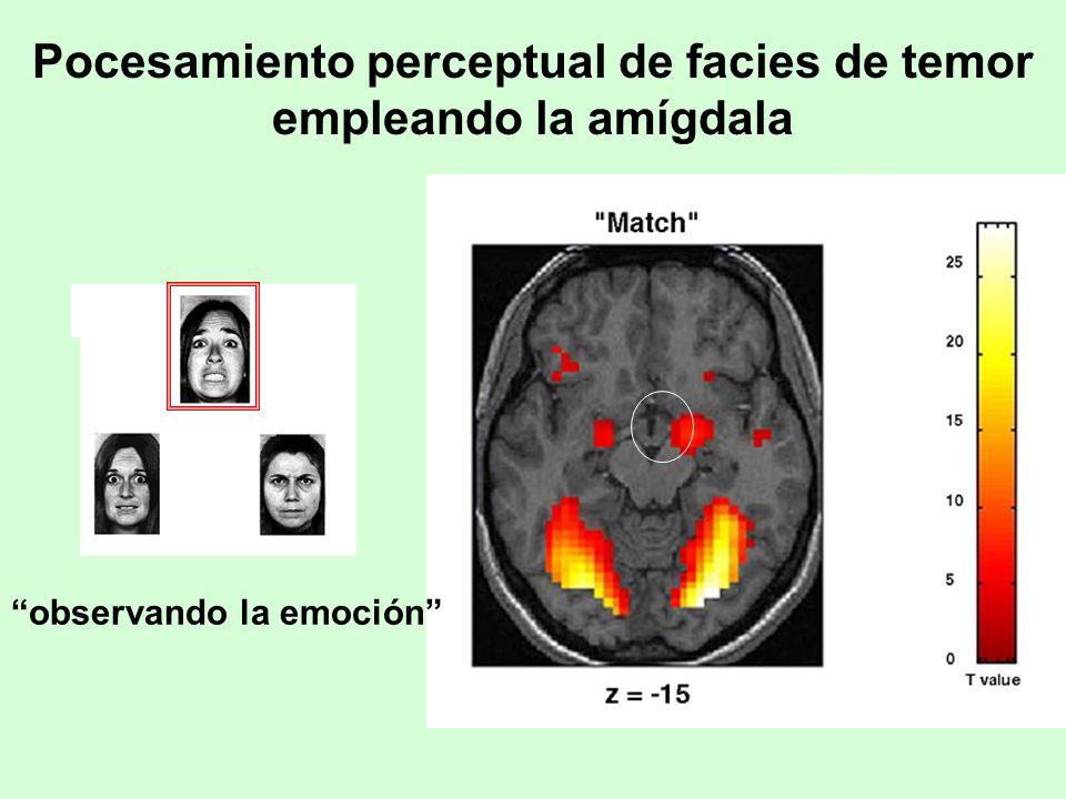 Pocesamiento perceptual de facies de temor empleando la amígdala