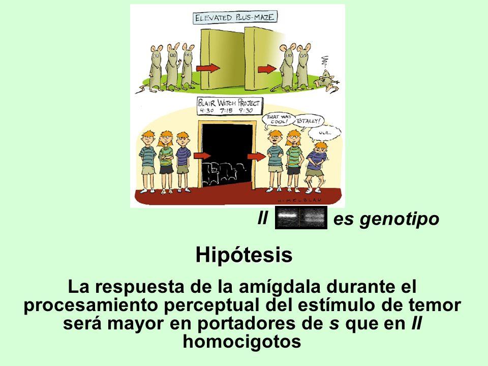 Hipótesis ll es genotipo
