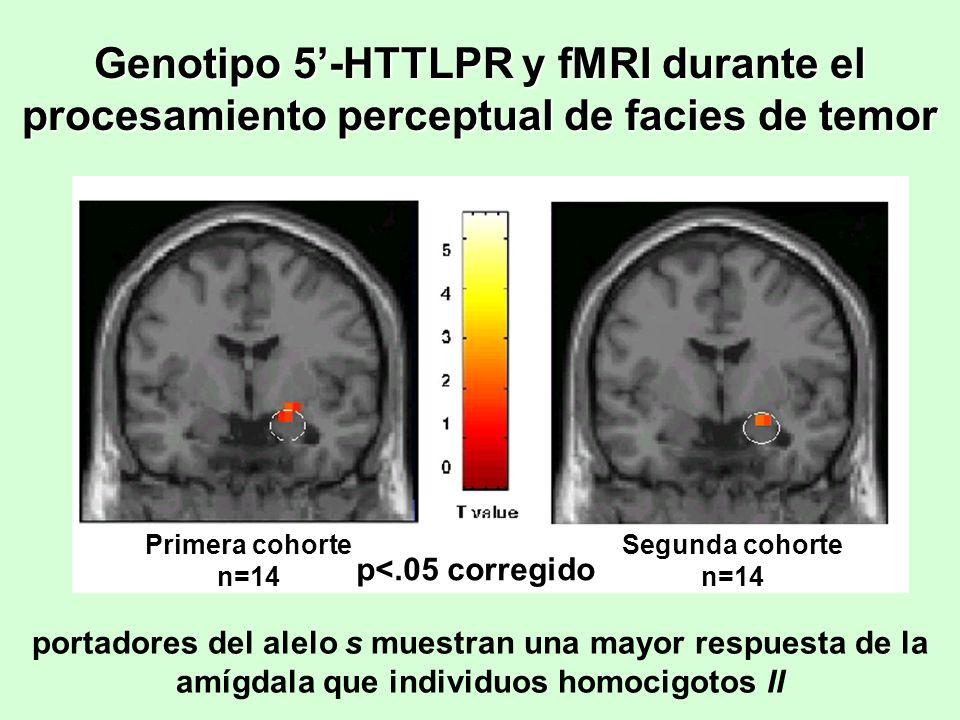 Genotipo 5'-HTTLPR y fMRI durante el procesamiento perceptual de facies de temor