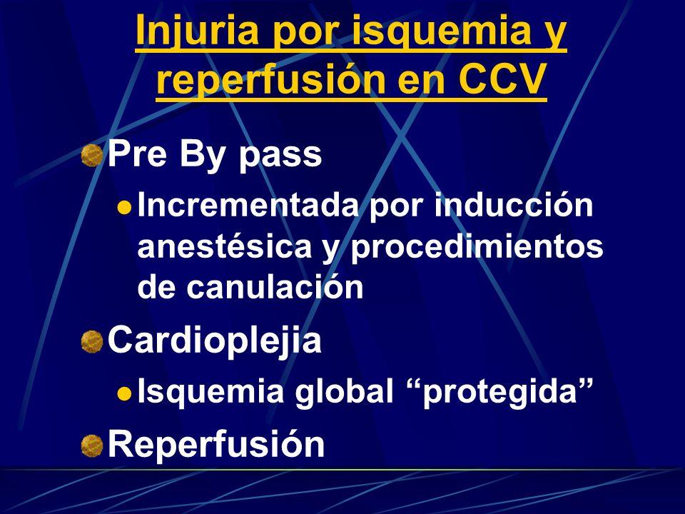 Injuria por isquemia y reperfusión en CCV