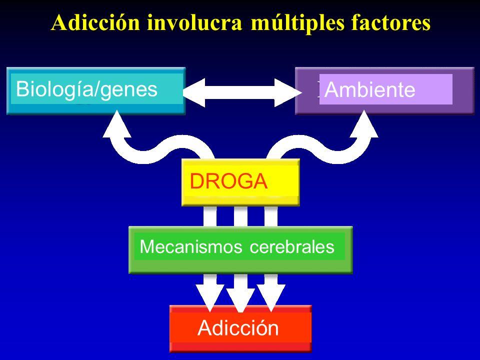 Adicción involucra múltiples factores