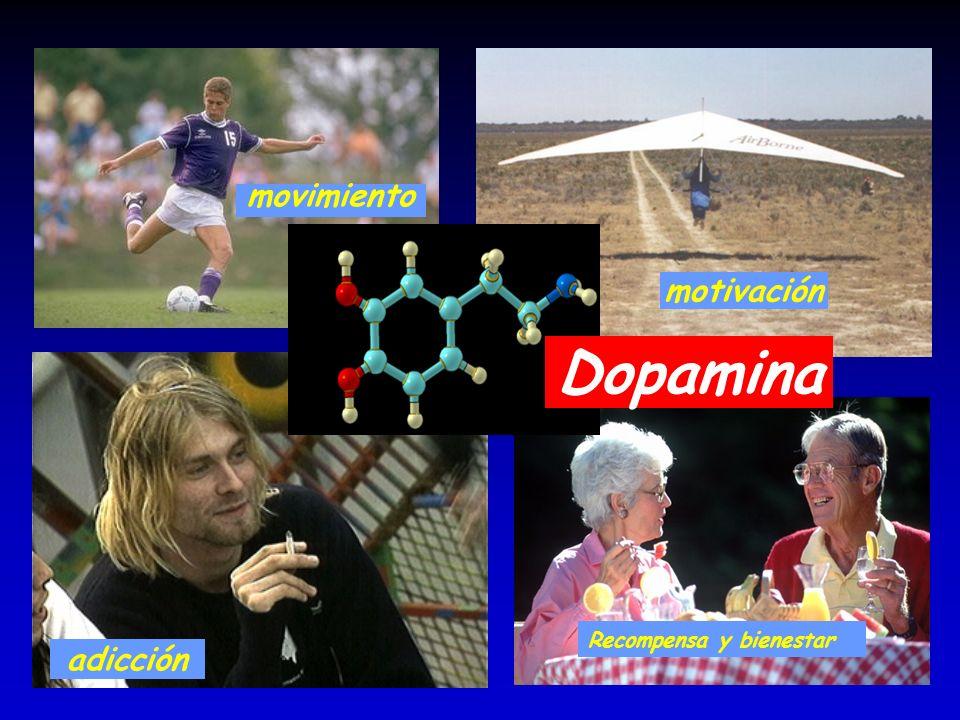 Dopamina movimiento motivación adicción Recompensa y bienestar