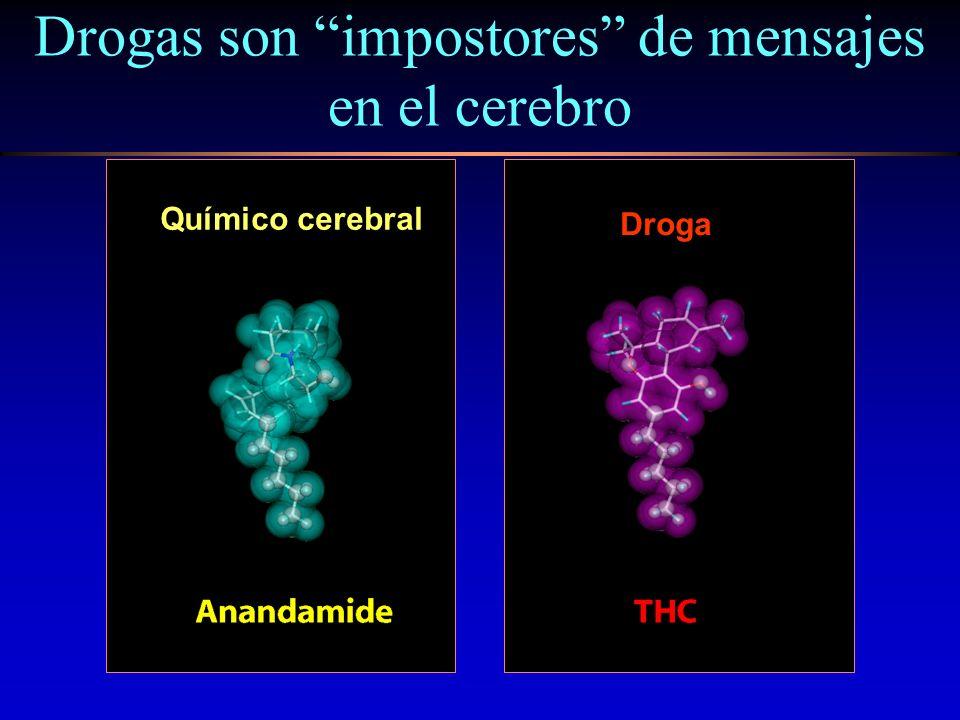Drogas son impostores de mensajes en el cerebro