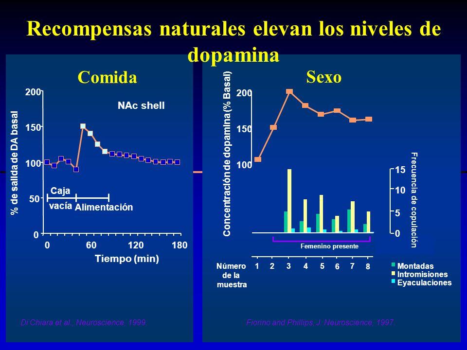 Recompensas naturales elevan los niveles de dopamina