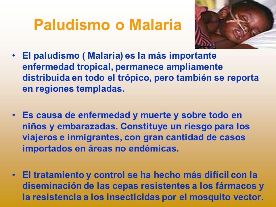 Paludismo o Malaria