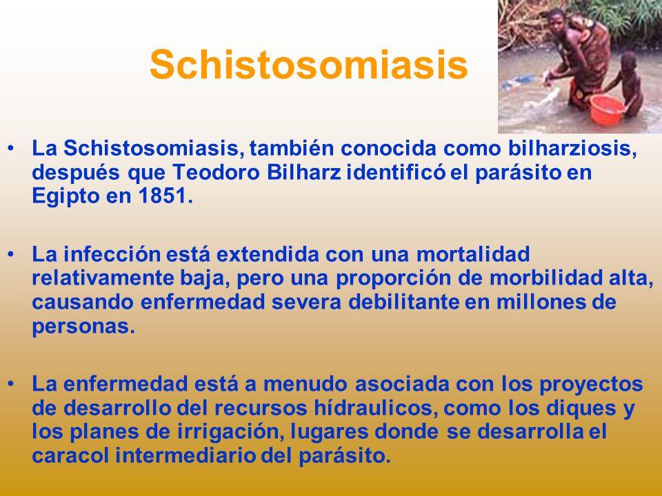 Schistosomiasis La Schistosomiasis, también conocida como bilharziosis, después que Teodoro Bilharz identificó el parásito en Egipto en 1851.