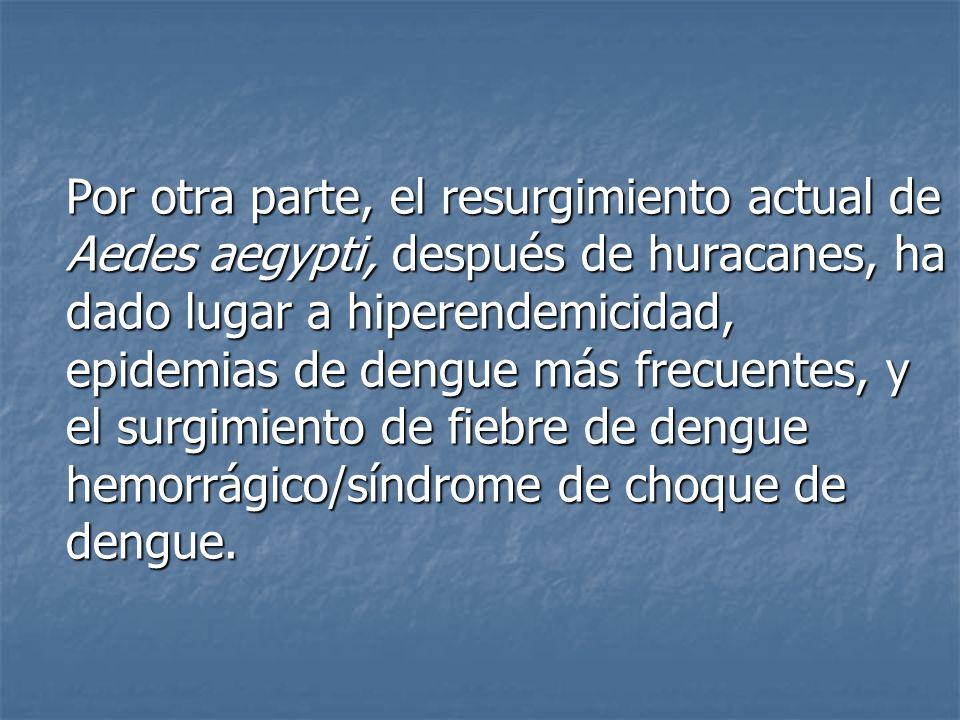 Por otra parte, el resurgimiento actual de Aedes aegypti, después de huracanes, ha dado lugar a hiperendemicidad, epidemias de dengue más frecuentes, y el surgimiento de fiebre de dengue hemorrágico/síndrome de choque de dengue.