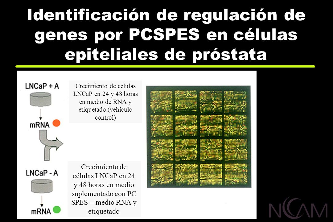Identificación de regulación de genes por PCSPES en células epiteliales de próstata