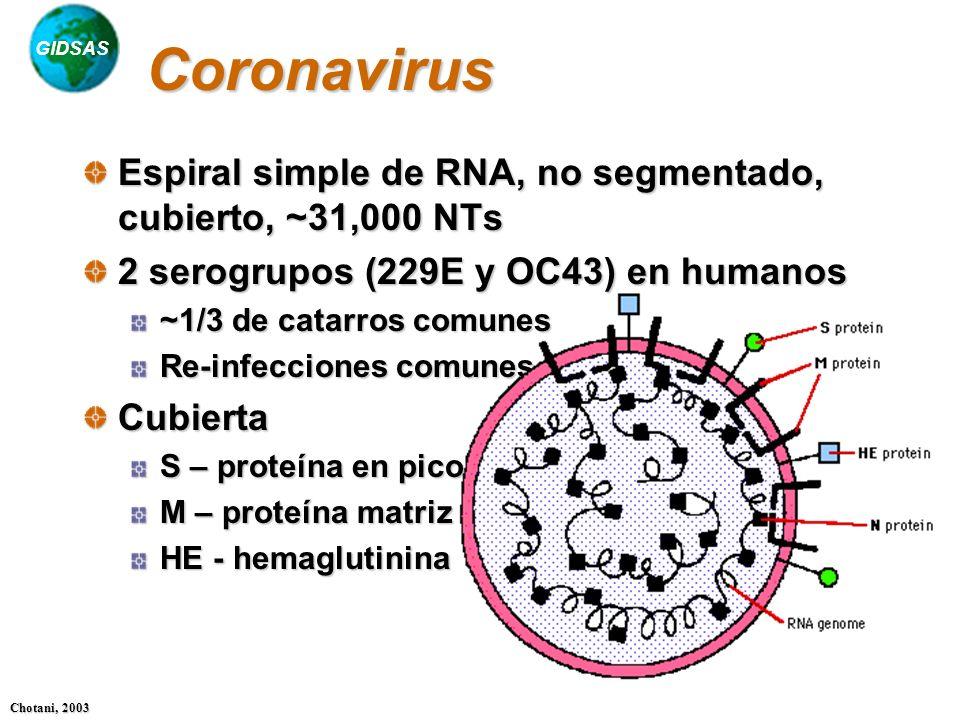 Coronavirus Espiral simple de RNA, no segmentado, cubierto, ~31,000 NTs. 2 serogrupos (229E y OC43) en humanos.