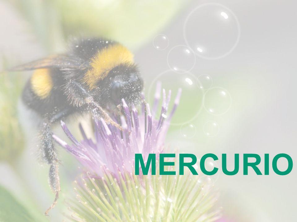 MERCURIO 21