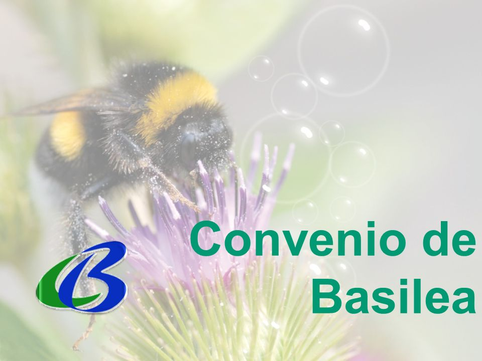 Convenio de Basilea 5