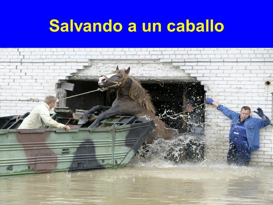 Salvando a un caballo