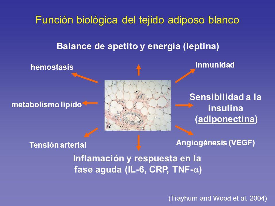 Función biológica del tejido adiposo blanco
