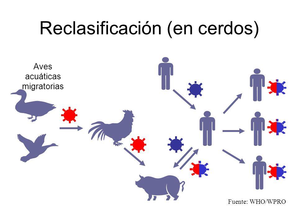 Reclasificación (en cerdos)