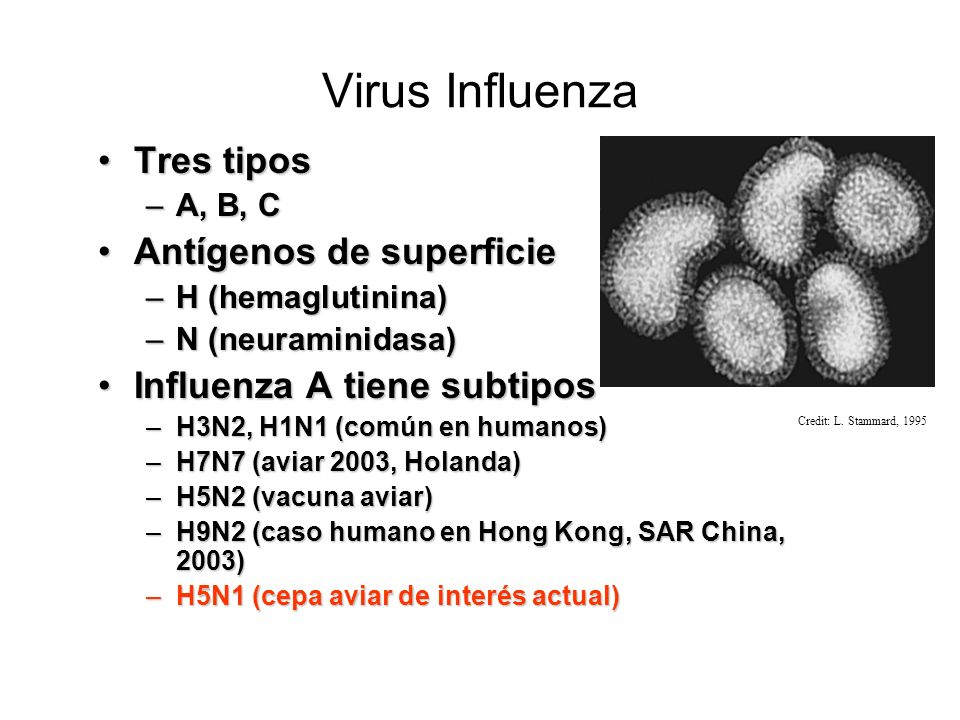 Virus Influenza Tres tipos Antígenos de superficie