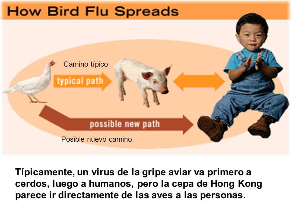 Camino típico Posible nuevo camino. Como se disemina la gripe aviar.
