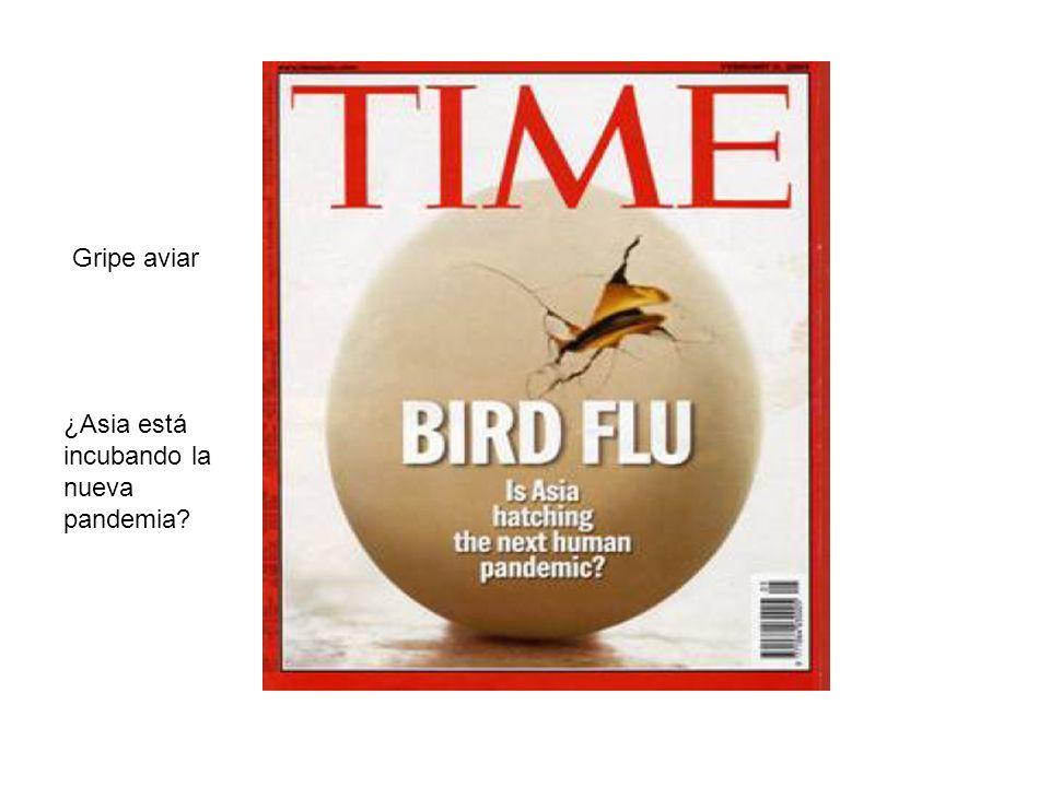 Gripe aviar ¿Asia está incubando la nueva pandemia
